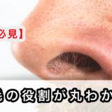 【鼻毛は意味ある?】3つの役割・成長速度・処理範囲を解説!