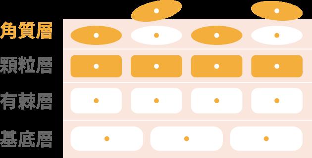 肌のターンオーバー